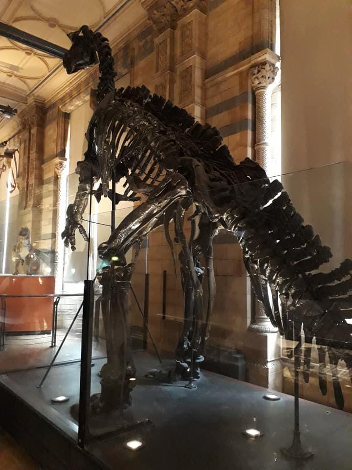 Inside Natural Museum